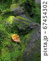 木の根に落ちる枯葉 67454302