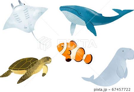 海のいきもの 人気者 67457722