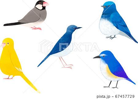 可愛い鳥たち4 67457729