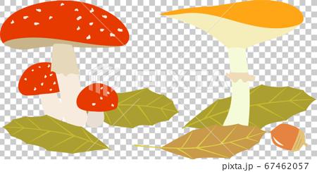 落ち葉とキノコ 67462057