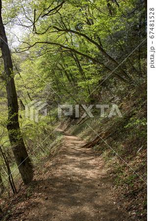 新緑の御岳山 ロックガーデン手前の山道 67481528