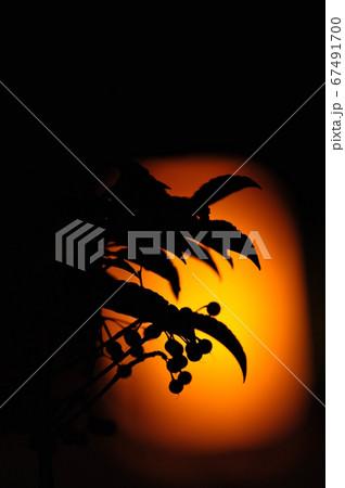 外灯を背景に実を付けた植物のシルエット 67491700
