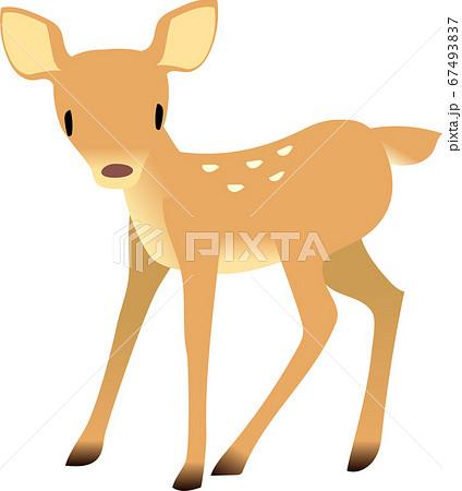 立っている可愛い小鹿 67493837