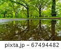 新緑の公園 雨上がりのリフレクション 67494482