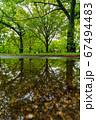 新緑の公園 雨上がりのリフレクション 67494483