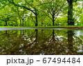 新緑の公園 雨上がりのリフレクション 67494484