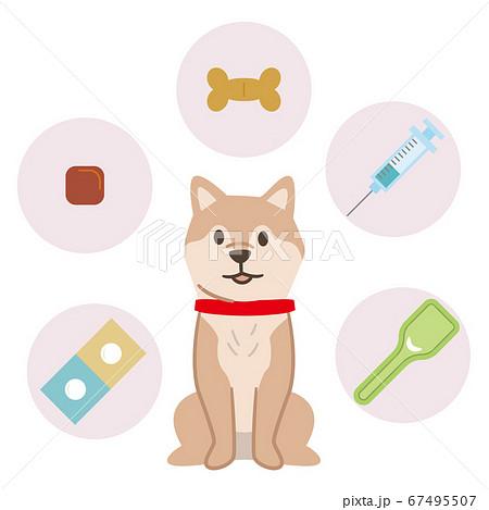 犬の予防医療イメージ 67495507