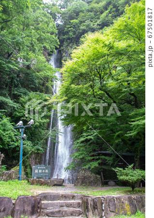初夏の絹掛の滝とモミジ 岡山県新見市 67501817