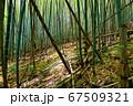 日本の風景 67509321