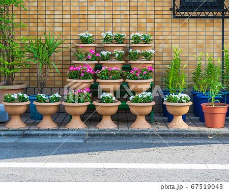 きちんと並んでいる植木鉢の風景写真 67519043