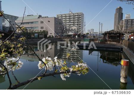 江東区横十間川親水公園 桜と水上アスレチックとパルシティ江東 67536630