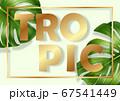 Monstera leaves frame 67541449
