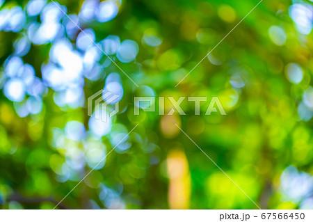 【背景素材】緑の丸ボケ キラキラ玉 67566450