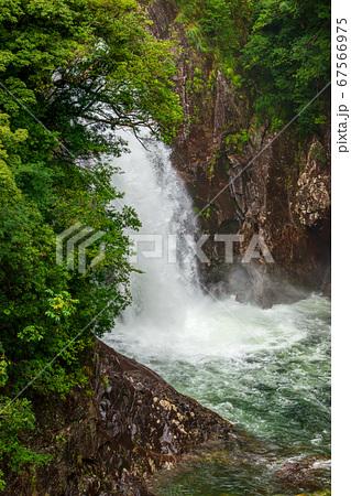 竜神の滝の絶景(7月)新緑と激流、屋久島の滝 67566975
