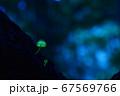 森の妖精981 67569766