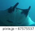 シミラン諸島のマンタ 67575537