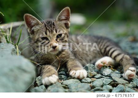梅雨の晴れ間に遊び疲れてまったりする野良猫の子猫 67576357