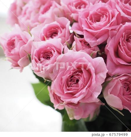 ピンクのスプレーバラカンタービレ 67579499
