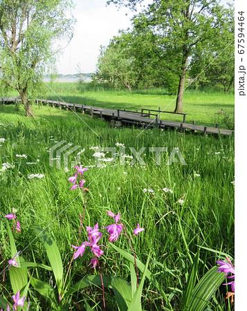 北柏ふるさと公園 初夏の花咲く水辺の景色 67594464