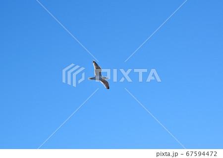 空を飛ぶ一羽の海鳥-4 (九十九里浜) 67594472