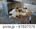ベンチの下で休む野良猫 67607376