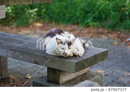 ベンチの上で寝そべる野良猫 67607377