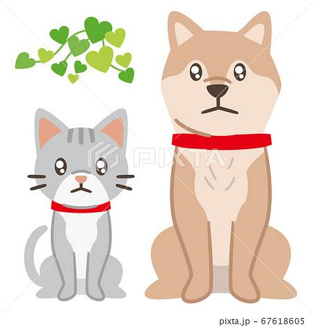 悲しい目で見つめる犬と猫 67618605