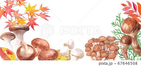 秋の収穫イメージバナー。いろいろなきのこで飾ったフレーム。水彩イラスト。 67646508