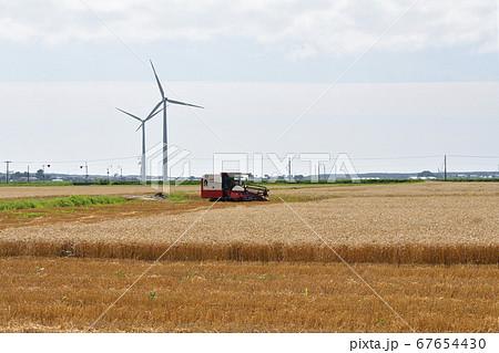 北海道江差町で黄金色の麦秋を迎えコンバインで刈り入れ作業をする夏の風景を撮影 67654430