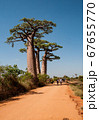 Baobabs along the sandy track near Morondava in Madagascar  67655770