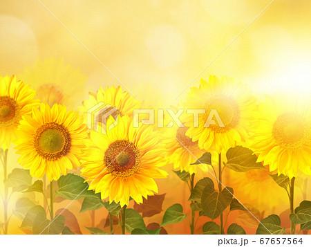 向日葵のイメージ的な背景 67657564