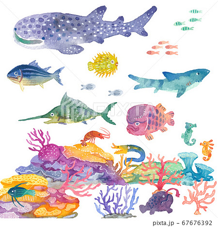 サンゴの海 67676392