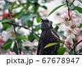 ボケと鳥 67678947