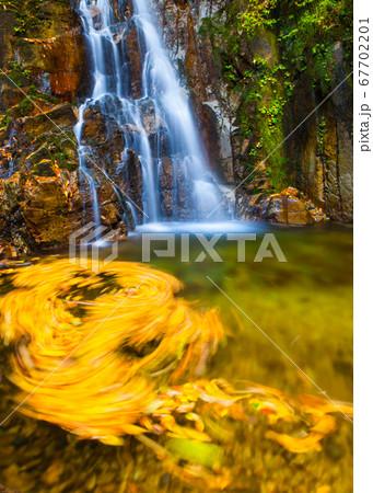 滝と落ち葉の風景です。落ち葉が渦巻を作っています。雄滝・雌滝・庄原市 67702201