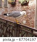 ヴェネツィアのお腹の空いたカモメ 67704197