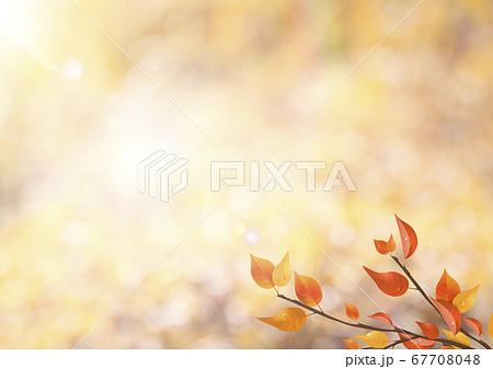 秋-紅葉-枯葉-逆光-朝露-さわやか 67708048