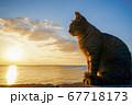 夕日と猫(さくらねこ) 67718173
