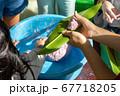 ムーチー(鬼餅)作り 67718205