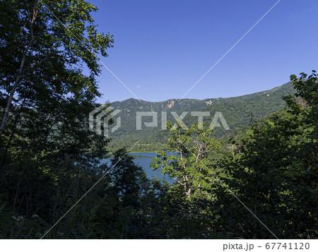 木々の向こうに見えるオコタンペ湖 67741120