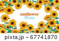 向日葵の一面フレーム手描きイラスト 67741870