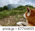 自然を満喫する秋田犬 67744655