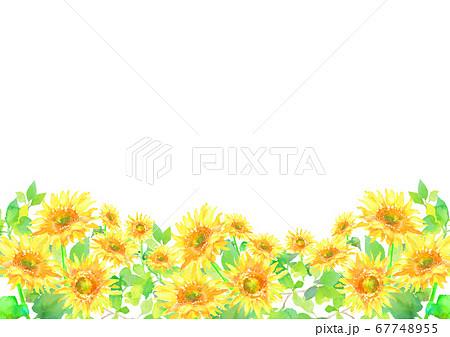 水彩で描いたひまわり畑のイラスト  67748955