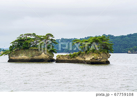 日本三景松島の風景 双子島(鯨島・亀島) 宮城県松島町 67759108