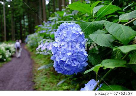 岩手県みちのくあじさい園の遊歩道 67762257