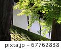 東福寺  新緑  蓮 67762838