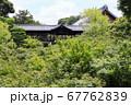 東福寺  新緑  蓮 67762839