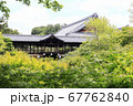 東福寺  新緑  蓮 67762840
