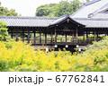 東福寺  新緑  蓮 67762841