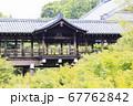 東福寺  新緑  蓮 67762842