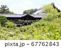 東福寺  新緑  蓮 67762843
